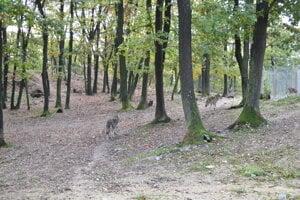 New wolf enclosure