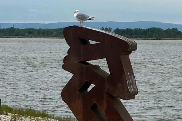 Seagulls often visit the Danubiana Meulensteen Art Museum located on an peninsula in the middle of the Danube.