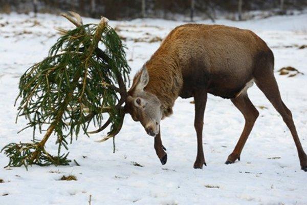 Deer enjoying a Christmas tree.