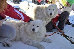 Cuddling dogs