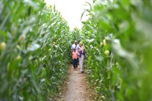 Corn labyrint in Vlčkovce
