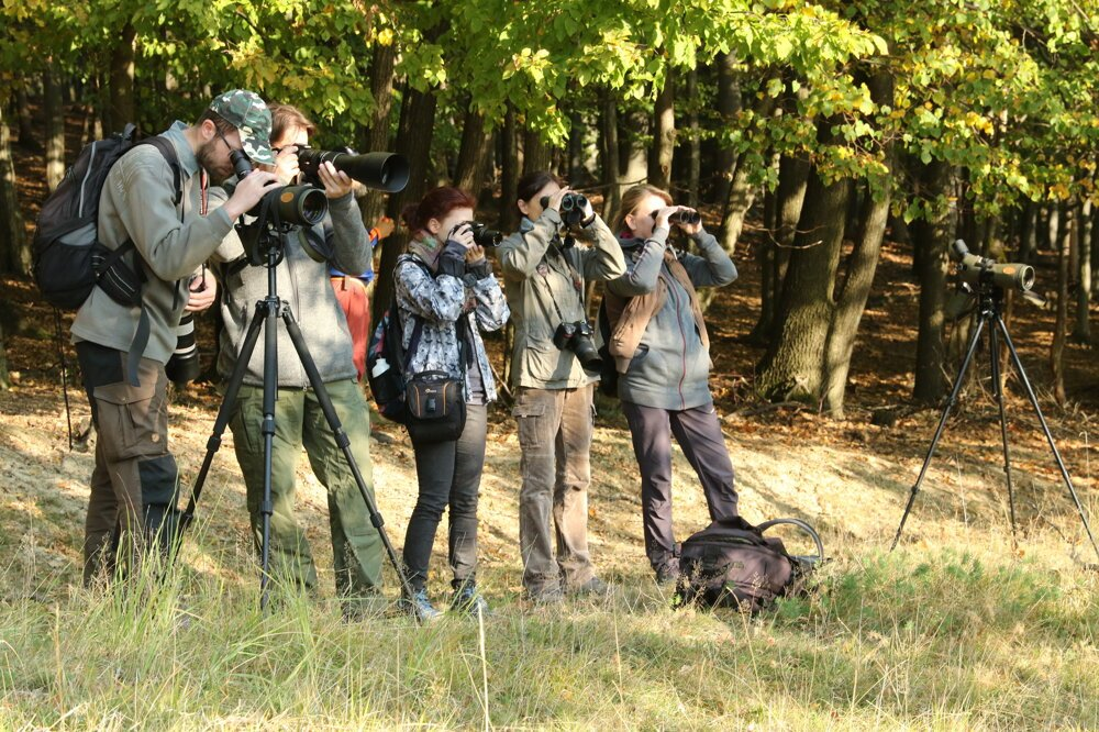 Tourists observe the fallow deer in Slovakia.