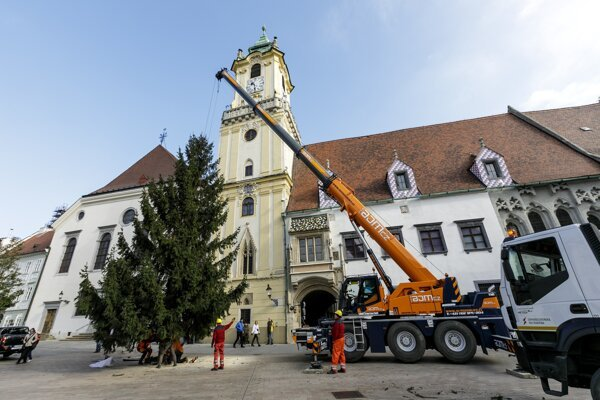 The 2019 Bratislava Christmas tree will light up the capital's Main Square in late November