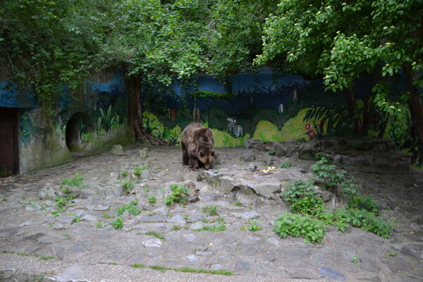 New facility for Félix teh bear is the top priority for the new director of Zoo Bratislava, Júlia Hanuliaková.