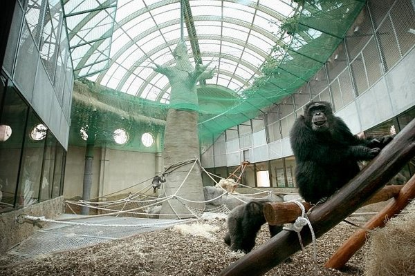 Bratislava Zoo opened a new Pavilion of Great Apes.