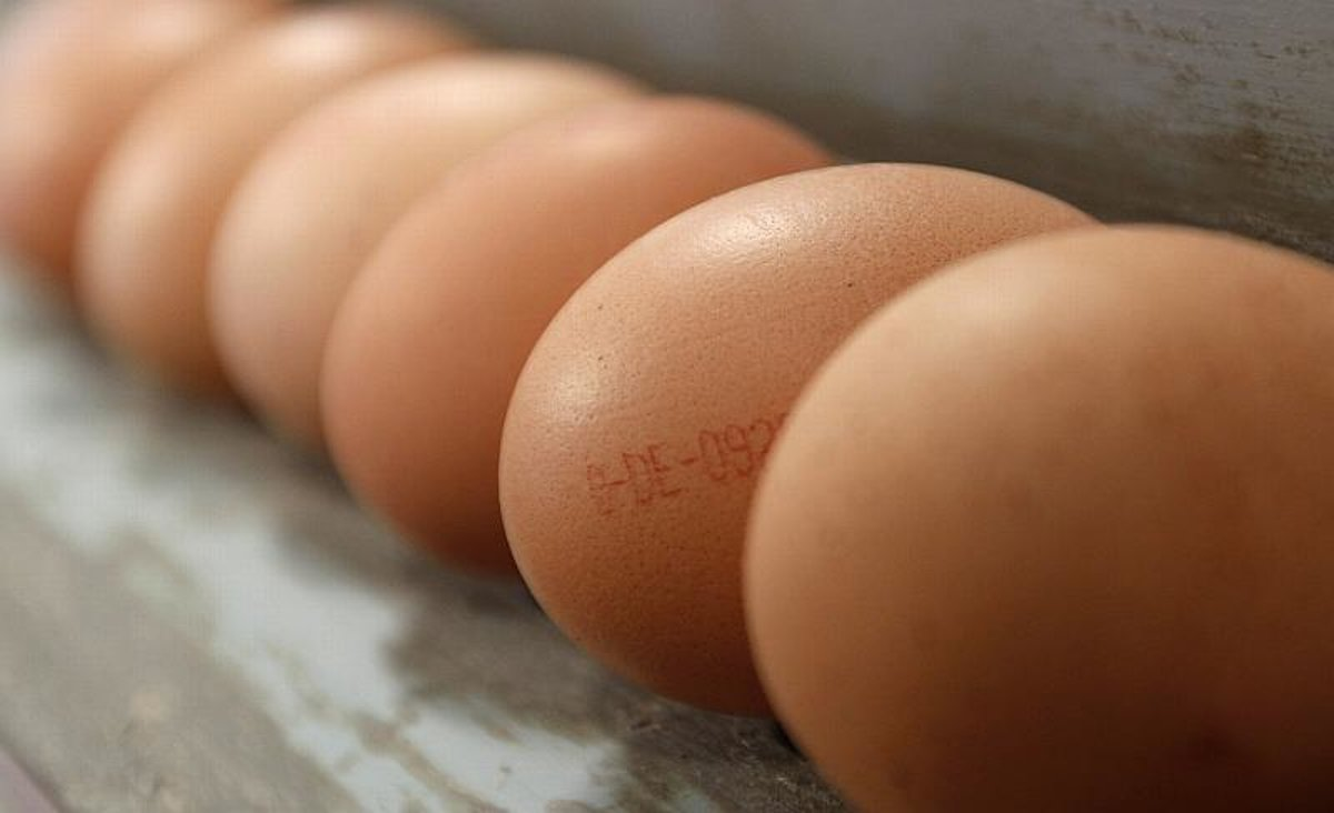 Supermarkets remove egg products from shelves as scare grows