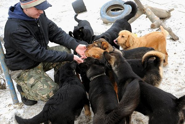 Dogs await new owners at an animal shelter in Košice.