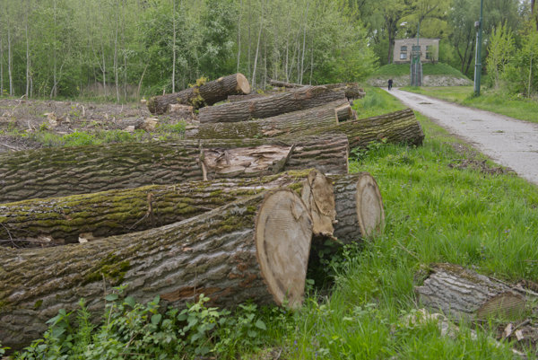 Trees cut down on Sihoť island.