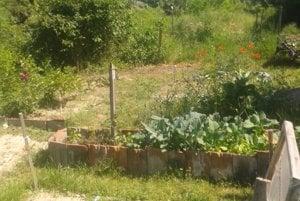 Vrakunská komunitná záhrada (Vrakuňa community garden)