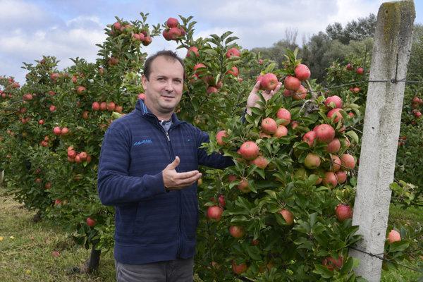 An apple orchard in eastern Slovakia