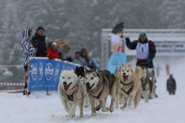 Dogsled of Martin Brzeka (Czech Republic) at Šachtičky, February 21.