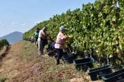 Michelin-starred restaurants buy Slovak wines while inspectors in Slovakia remove some of them from the shelves of stores