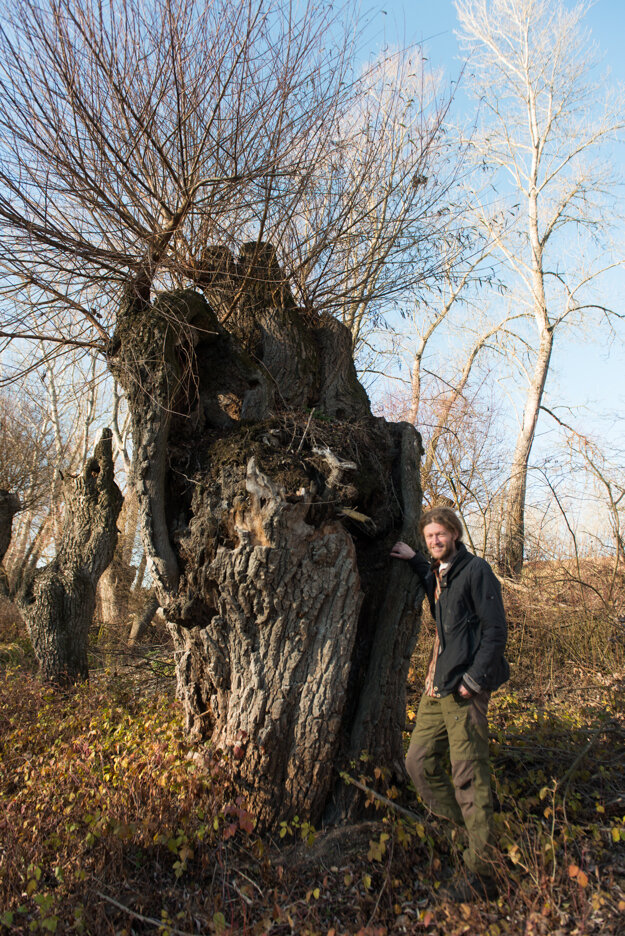 Pavol Littera in the renewed willow grove at Veľkolélsky Island.