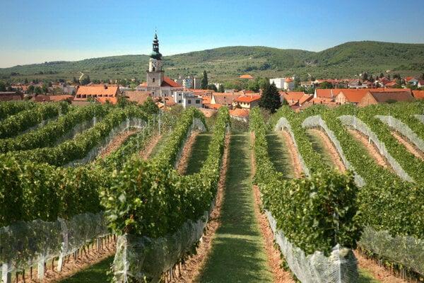 Blue vineyards