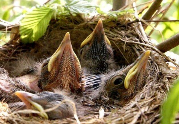 Birds ensting in spring, illustrative stock photo.