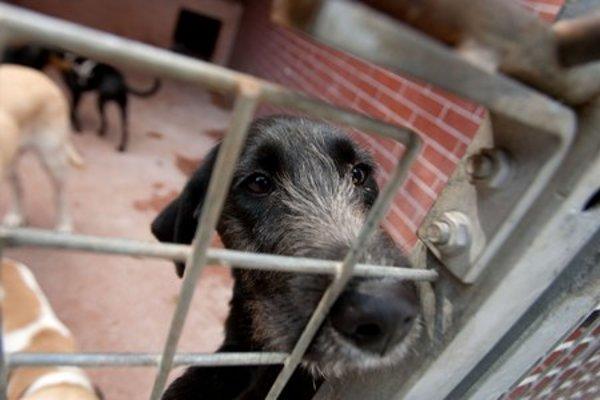 The Sloboda Zvierat's animal shelter in Bratislava