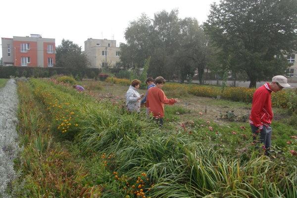 Natural garden in Trenčín