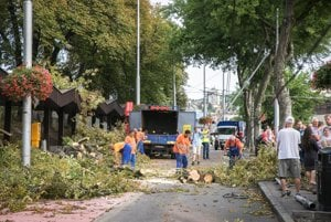 Removing trees, damage, at the Bratislava Main Station