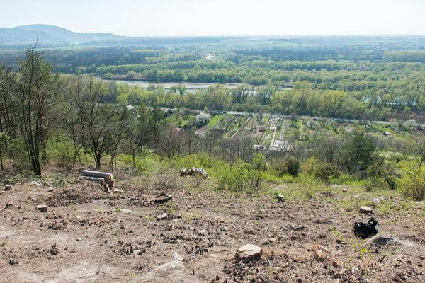 The slope of Devínska Kobyla with removed black pines.