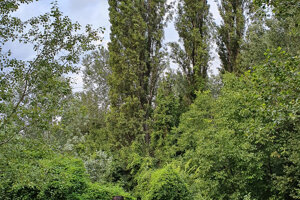 Toplars recall the famoust past of the Lido.