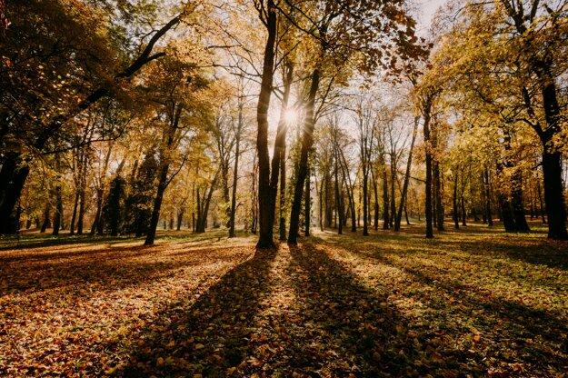 Park in Dolná Krupá