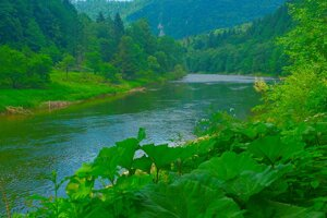 The Dunajec River