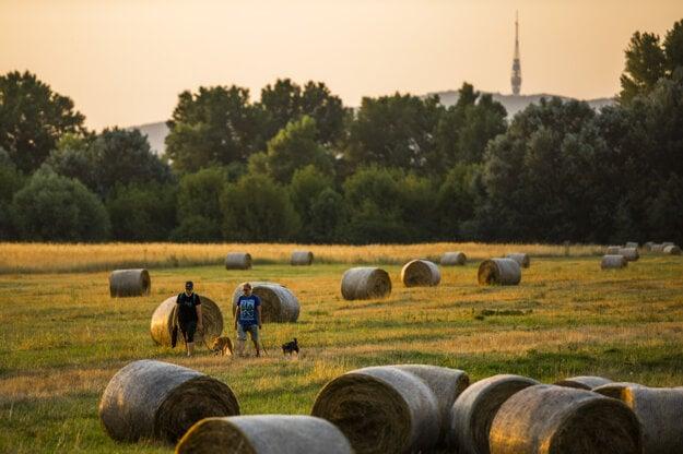 People walk with dogs by haystacks near the island of Kopáč near the Bratislava dam, the TV tower on Kamzík Hill in the background.