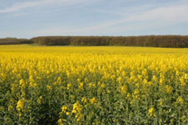 Slovakia has upped the production of rapeseed for use in bio-fuels.
