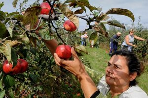 Fructop grows apples and other fruit