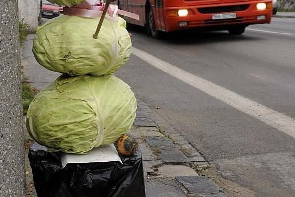 Stupava is known for its cabbage production