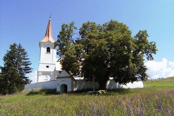 The winning tree, in Leliceni, Romania.