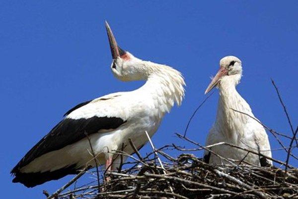Storks nesting.