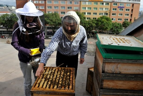 """Beekepers work at """"adopted city beehives""""."""