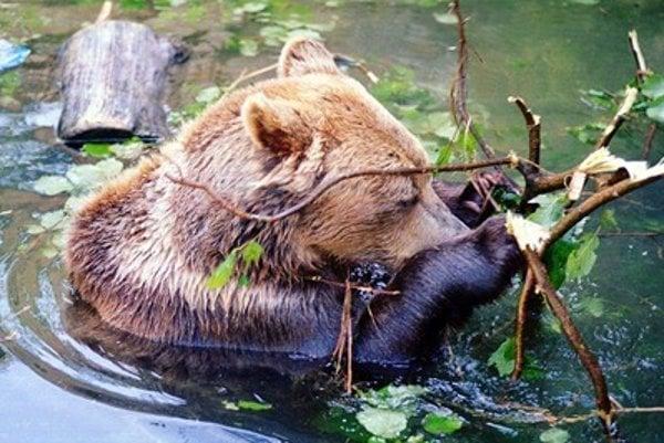 Bojncie zoo has a tardition of bear breeding, illustrative stock photo.