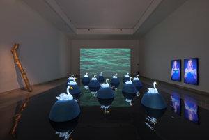Jana Želibská: Swan Song Now / Labutia pieseň teraz; multi-media installation. 2017.