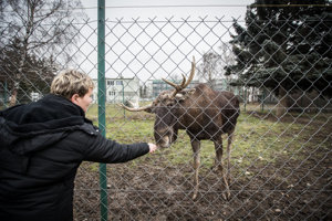 Nik the Elk in Lužianky
