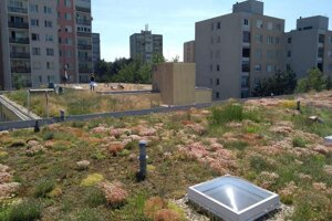 The extensive green roofs are those which, instead of traditional covering, are covered with low-maintenance plants.