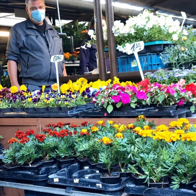 A man sells potted flowers at the Miletička open-air market in Bratislava.