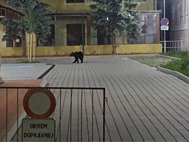 A bear walking on the street in Žiar nad Hronom on June 21, 2021.