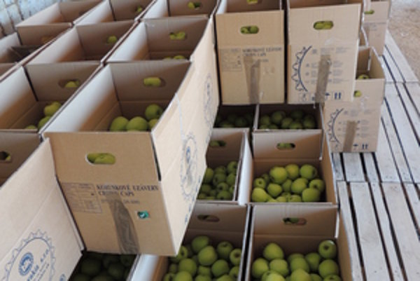 Apples, illustrative stock photo