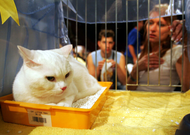 Cat show, illustrative stock photo