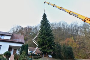 The 36-year old tree has already started to endanger the nearby house and its inhabitants.