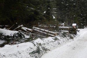 Hurricane felled trees in Jasná/Chopok December 10.