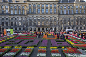 """Crates with tulips in a pattern reading EU 2016 laid out on Dam Square to mark the Dutch six-month EU presidency on the fifth national """"tulip day' in Amsterdam."""