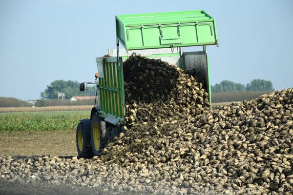 Slovak beet growers and two sugar refineries produced almost 160,000 tonnes of sugar in 2019.