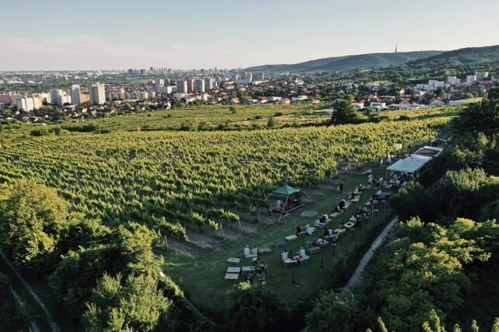Slovak winemakers regularly win international awards for their wines, but top producers are warning their industry could collapse completely as they struggle with imports of cheap wine, a lack of state support and the Covid-19 pandemic.