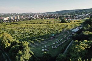 The vineyard Tále