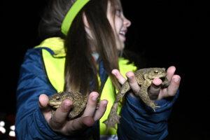 WEEK 14: A girl helps migrating frogs in Skalka nad Váhom cross the road on April 6, 2021.