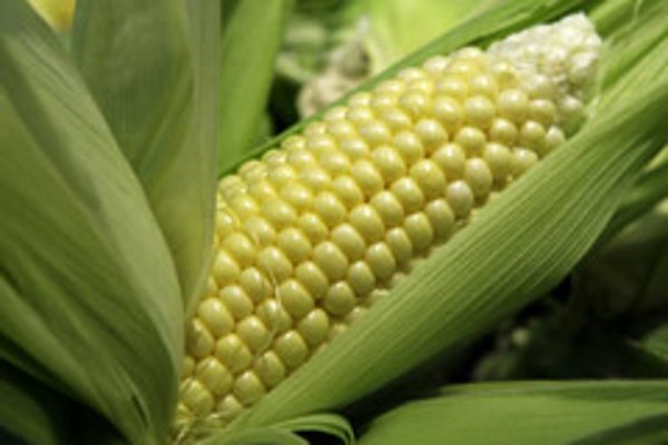 Commodity investors are tipping cereal crops such as corn.