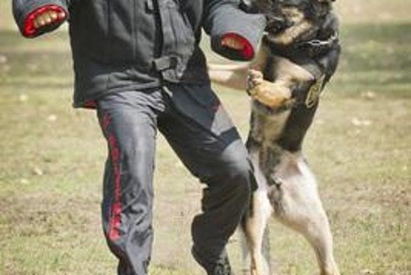 Dog protection training, illustrative stock photo.